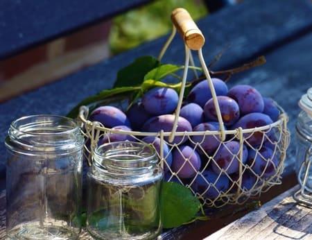 Prune-aliments-qui-stimulent-la-serotonine