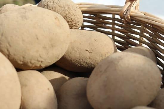 alimentation-biologique-elimination-des-allergies